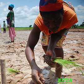 """The first International Day of Rural Women was observed on 15 October 2008. This new international day, established by the General Assembly in its resolution 62/136 of 18 December 2007, recognizes """"the critical role and contribution of rural women, including indigenous women, in enhancing..."""