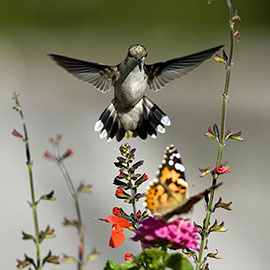Nothing brings beauty to your yard or garden like butterflies and hummingbirds. Their small size only accentuates their beauty, packing more awesomeness per square inch than even the most gorgeous of sunsets. But their beauty is more than just skin deep, because they also pollinate flowers and...