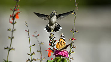 Butterfly and Hummingbird Day