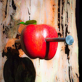 November 18, 1307, is supposedly the date that William Tell shot the apple off his son's head at the command of the evil Austrian governor of his province in Switzerland. Though the incident, and Tell himself, may both have been completely fictitious, the legend appears to have contributed to...