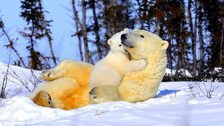 February 27 is an important day for one of the world's largest non-aquatic predators– it's International Polar Bear Day. This annual event raises awareness about the plight of these magnificent mammals.  Like many other creatures, climate change is drastically impacting polar bears,...