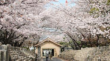 Vernal Equinox Day (Shunbun no hi-Japan)