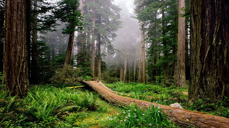 The International Day of Forests and the Tree is held annually on 21 March to raise awareness of sustainable management, conservation and sustainable development of all types of forests for the benefit of current and future generations. 