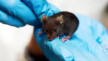 World Day for Laboratory Animals