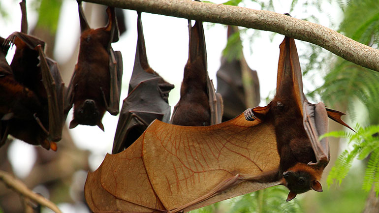 Smiley Bat and Bat Conservation International have declared this holiday to celebrate the bats returning from their winter migrations. 