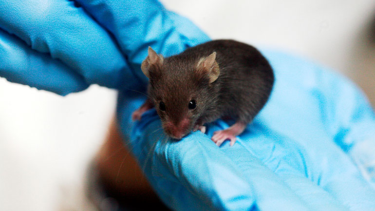World Day for Laboratory Animals is a United Nations recognized day of international commemoration of the suffering and killing of millions of innocent sentient beings in laboratories throughout the world.  Campaigning organisations in the UK and across the globe, will mark World Day for...