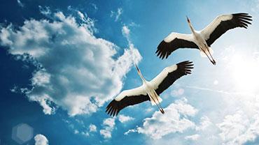 World Migratory Bird Day