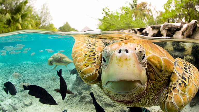 The purpose of World Turtle Day, May 23, sponsored yearly since 2000 by American Tortoise Rescue, is to bring attention to, and increase knowledge of and respect for, turtles and tortoises, and encourage human action to help them survive and thrive. Turtle Day is celebrated worldwide in a...