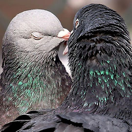 6 July 2013 is International Kissing Day or World Kiss Day. The idea behind the International Kissing Day is that many people may have forgotten the simple pleasures associated with kissing for kissing's sake, as opposed to kissing as mere social formality or prelude to other activities. Kissing...