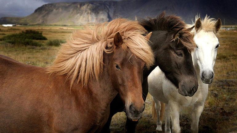 I Love Horses Day pays tribute to one of the greatly loved animals and pets. If you've never ridden a horse, you're missing out on something very special. I Love Horses Day is a great oportunity to try it!  They gallop and trot, whinny and neigh, capturing our imagination — and our...