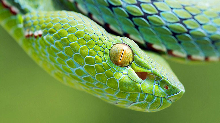 July 16, observed as the World Snake Day, is an ideal occasion to know and understand many things about these carnivorous reptiles, which are on the path of extinction mainly because of the myths and superstitions surrounding them. Snakes are one of the several groups of reptiles. They have...